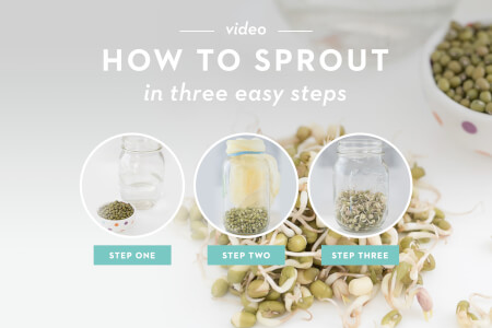 How to Sprout in 3 Easy Steps thumbnail