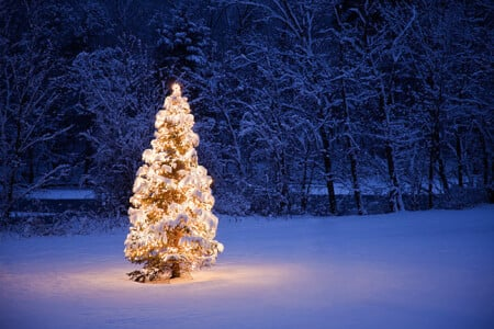 Oh Christmas Tree, Oh Christmas Tree! What will you be? Plastic or Real. thumbnail